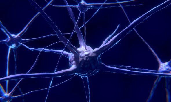zihin, nöron, nöral faaliyetler, Manşet, insan beyni, daha uzun yaşamanın anahtarları, beyin, araştırmalar