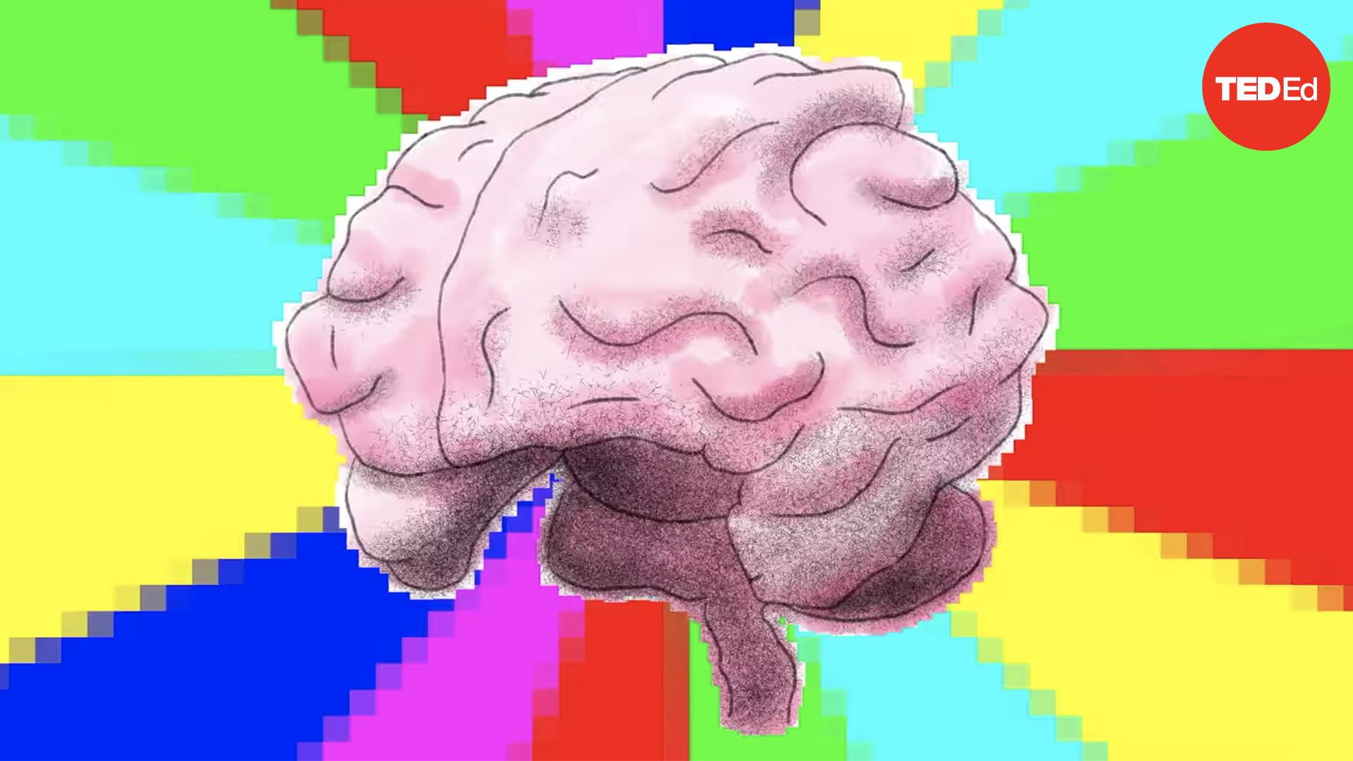 yaratıcılık, sol beyin, sağ beyin, mantık, Manşet, elizabeth waters, beyin
